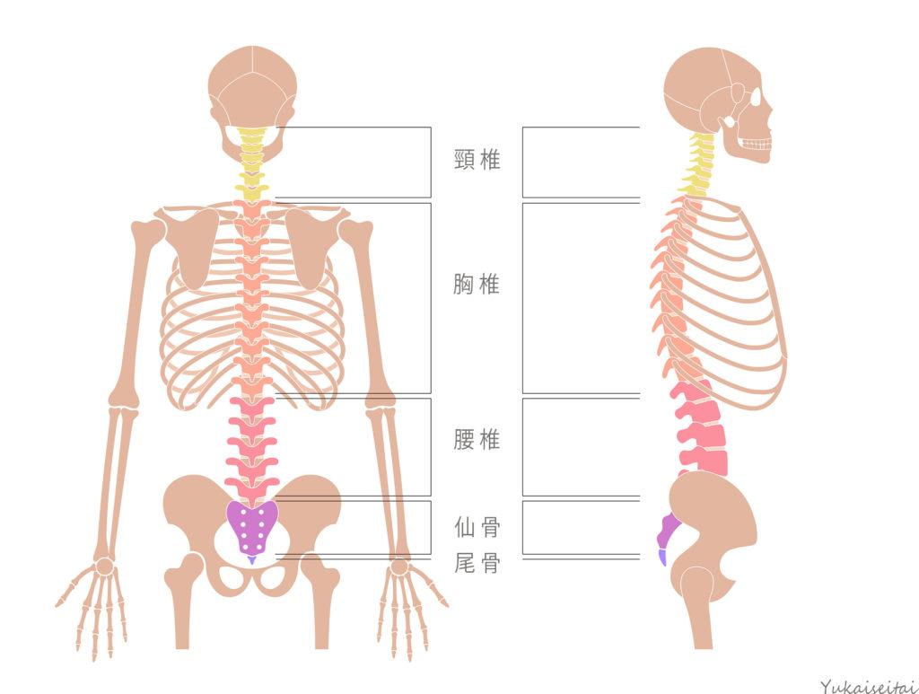 神経痛 原因 肋間
