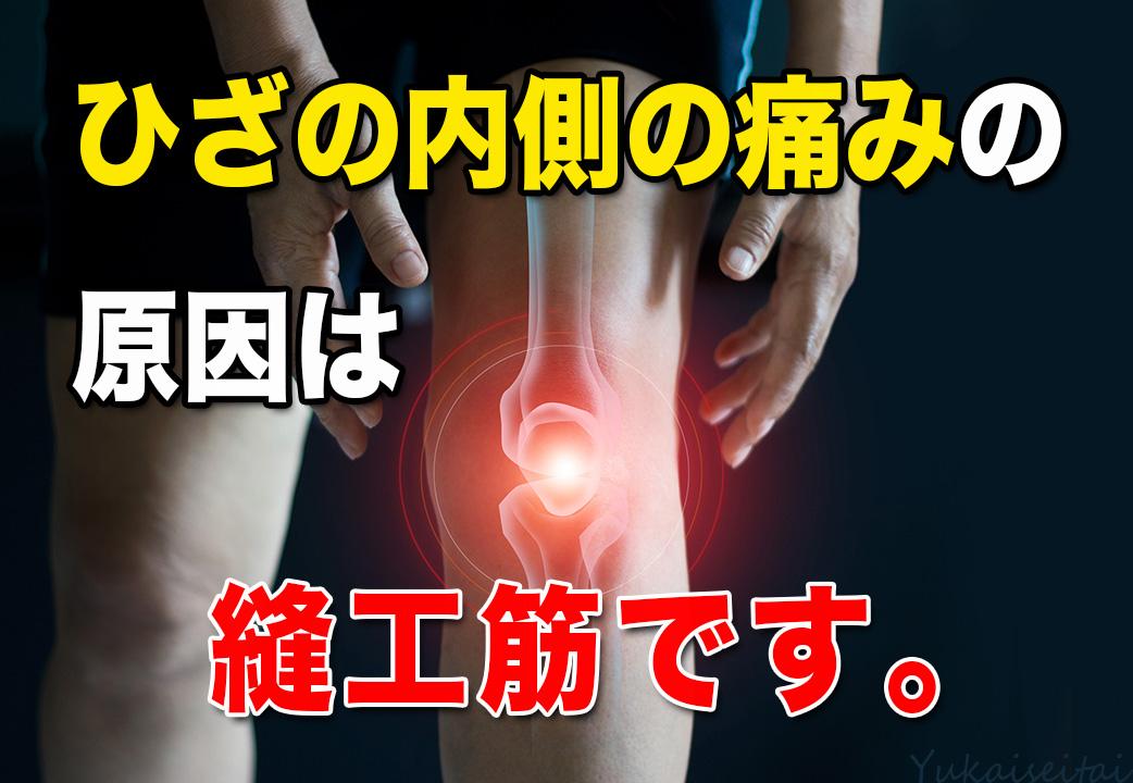 膝の内側の痛みの原因は縫工筋です。